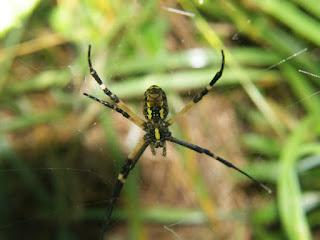 Foto Araña