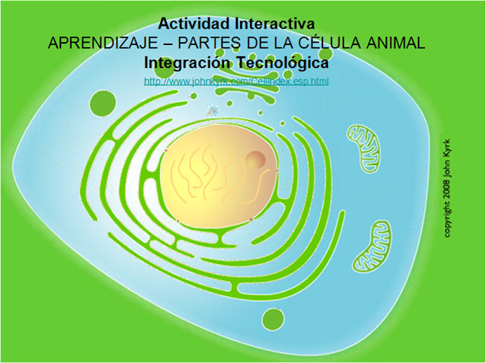 Actividad Interactiva PARTES DE LA CLULA ANIMAL