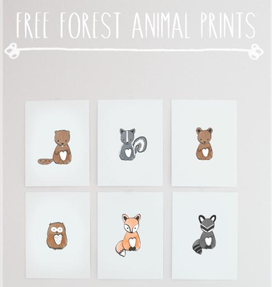 imagen_efimerata_burgos_cumpleaños_organizacion_otoño_animales_bosque_hojas_niñas_once_años_recurso_gratis