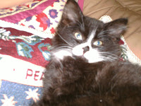 My 'Cutie Pie' Cat Tabitha