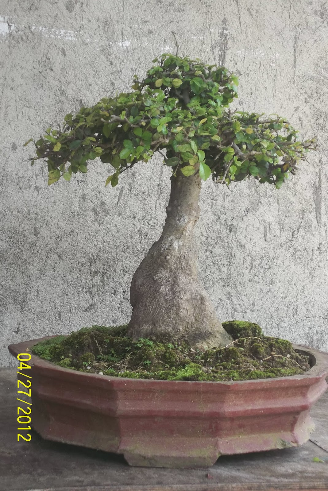 secret shaping bonsai
