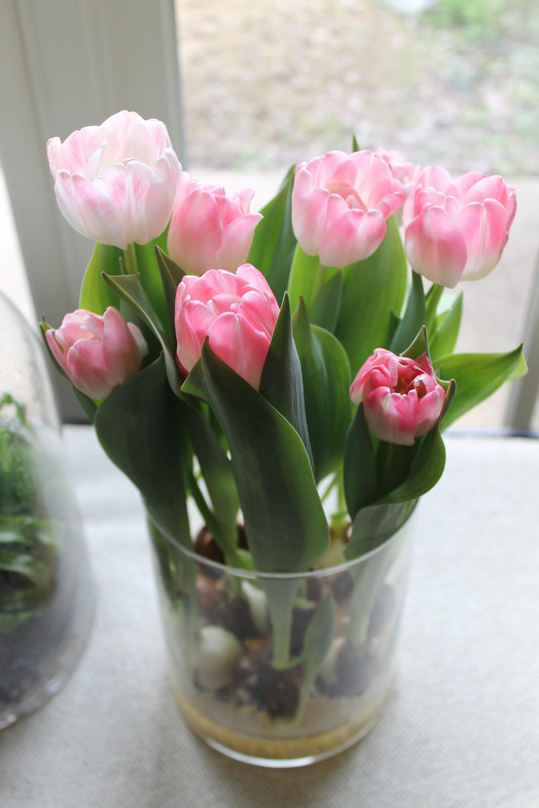 Цветы тюльпаны уход и посадка фото