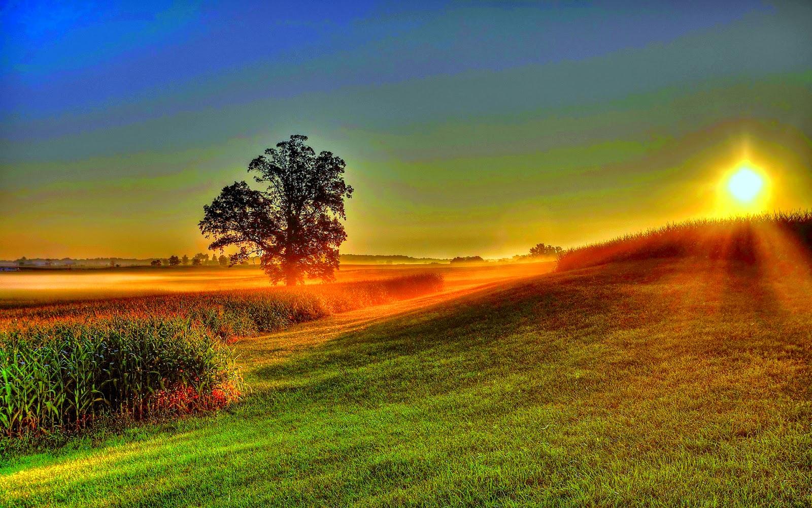 Dawn image picture