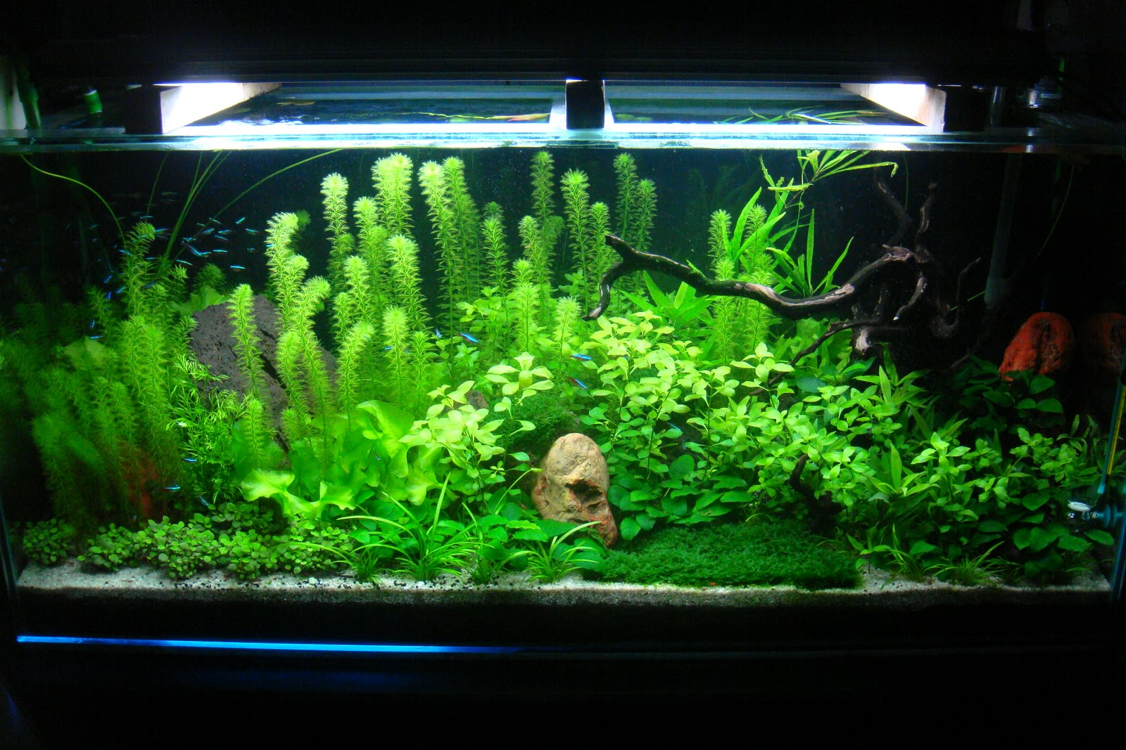 Indo modern gallery aquascape discus fish aquascape gallery aquascape aquascaping - Gambar aquascape ...