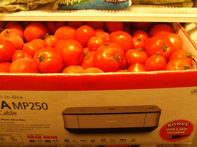 The Full Circle Gardener Freezing Tomatoes For Later