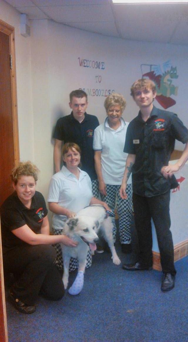 Dog Rescue Essex French Bulldog
