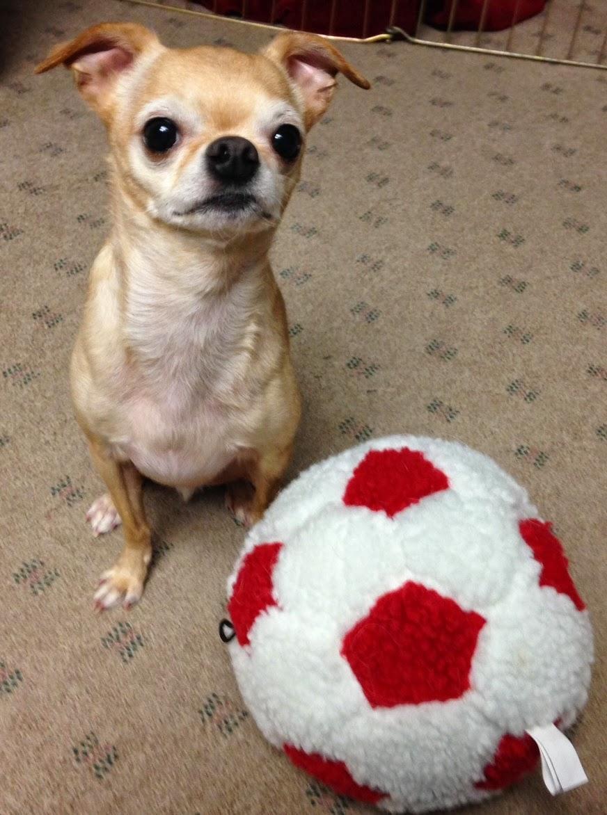 Chuck's Ball - Colorado Canine Orthopedics