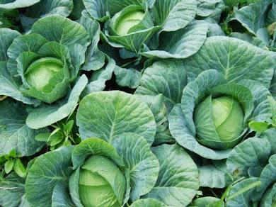 Agricultura Fámiliar as Mãos Que Alimentam a Nação