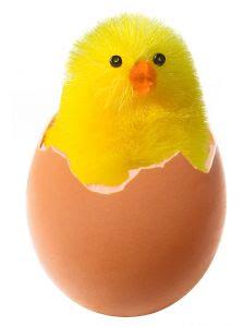 Sila abaikan anak ayam tu.