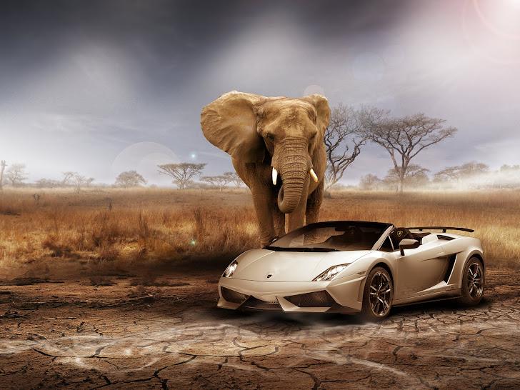 Lamborghini Gallardo Afrika