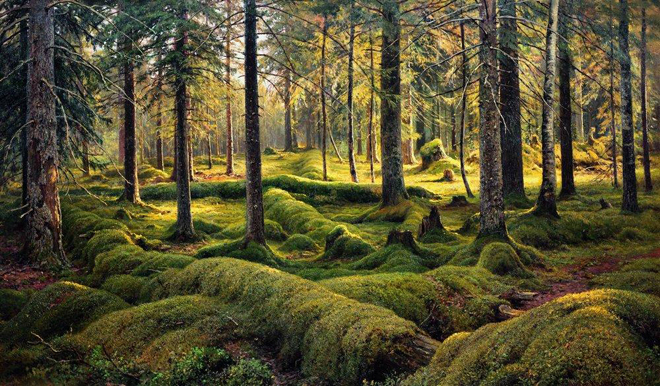 The Flying Clubhouse: Shishkin's Landscapes // Forest Cemetery, 1893