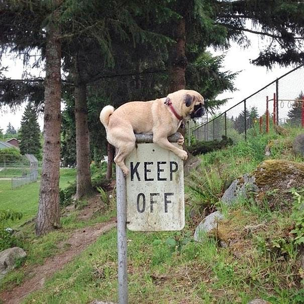 These 25 animals prove that rules are made to be broken (25 pics), rebel animals, first world anarchists, animal rebels, animals breaking rules