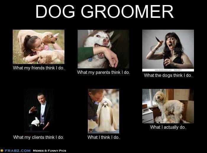 Funny Dog Meme Generator : Pet grooming the good bad furry still here