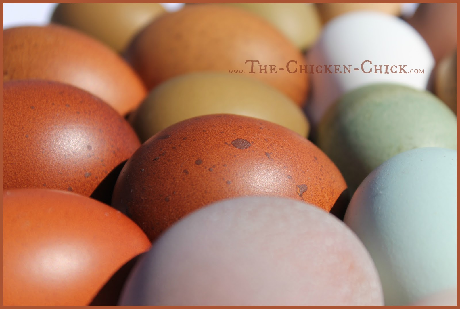 the chicken decrease in egg production causes u0026 solutions