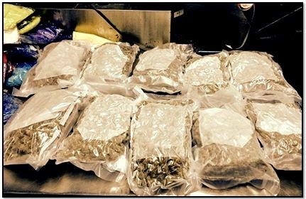 Ten vacuum sealed packages of marijuana were discovered in a checked bag at San Francisco (SFO).