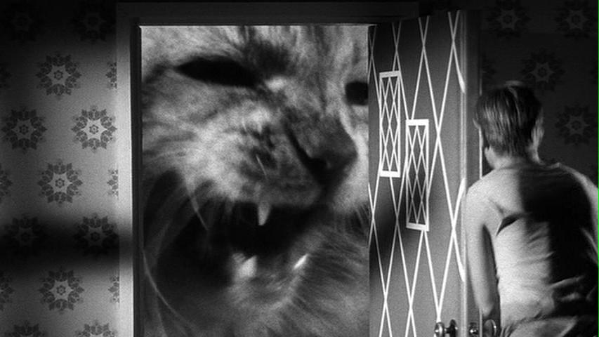 Incredible Shrinking Man Cat attack