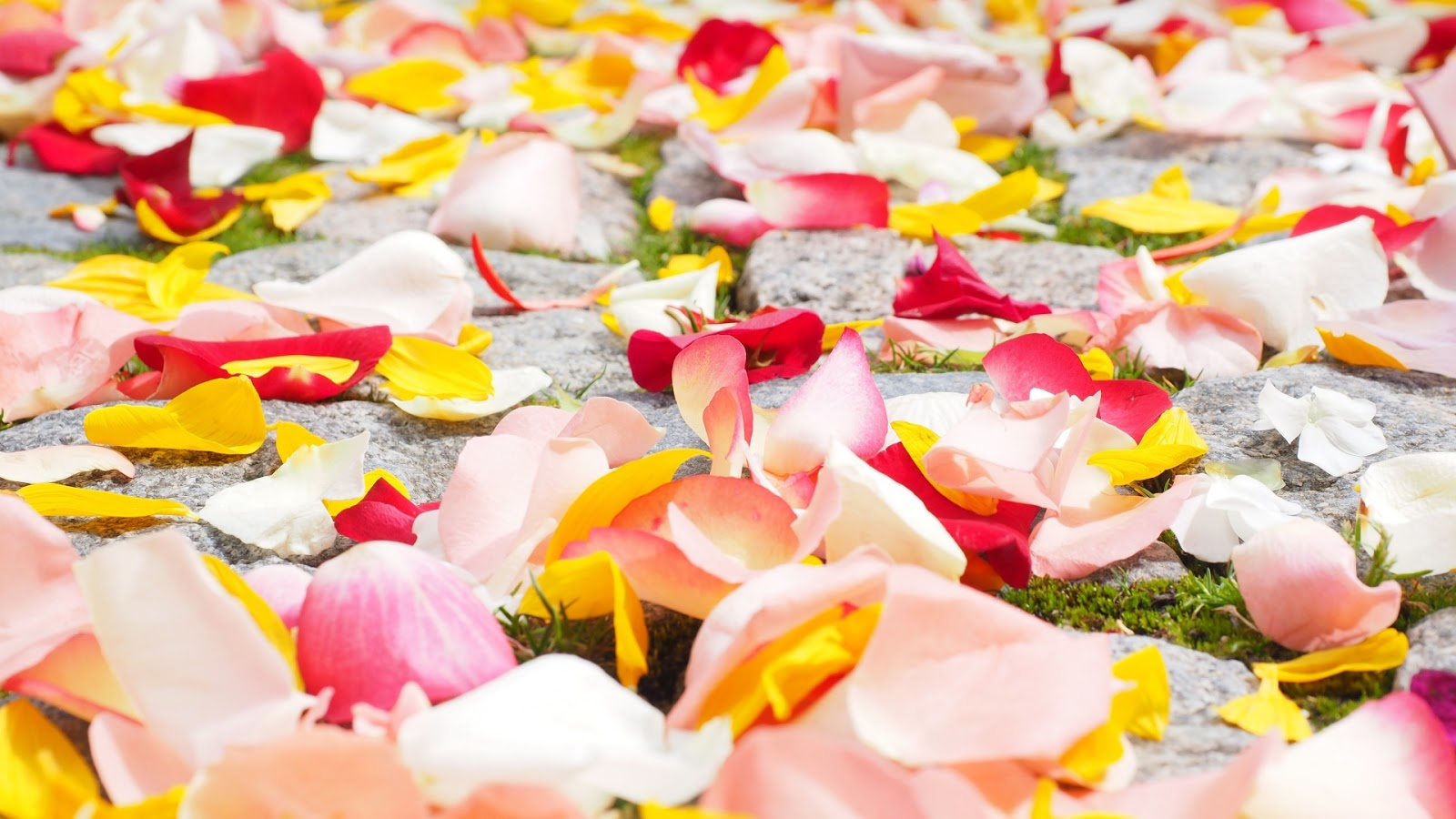 Rose Petals Desktop Wallpaper Widescreen