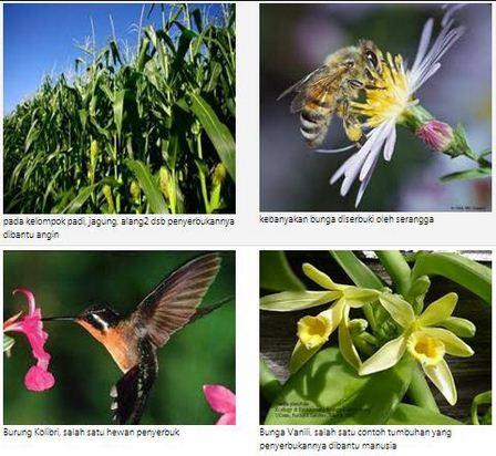 Cara Perkembangbiakan Tumbuhan secara Generatif