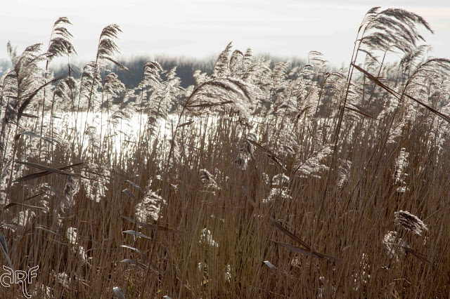reed in backlight
