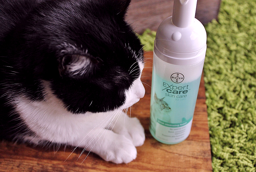 Your cat endures enough- Make bath time more amicable with Bayer® ExpertCare™ personal helath and grooming products at home. Find them at PetSmart. #BayerExpertCare AD