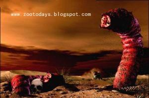 Illustrasi Mahluk Misterius Pembawa Maut Di Gurun Gobi - [www.zootodays.blogspot.com]