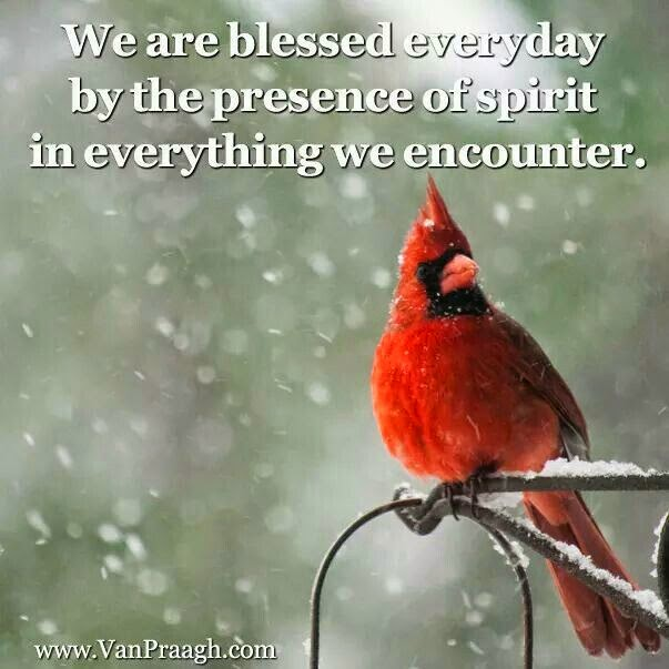 """We are blessed everyday by the presence of spirit in everything we encounter."" ~ Unknown; Picture of a Red bird."