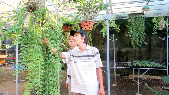Quảng Ngãi Đổi đời nhờ trồng lan rừng