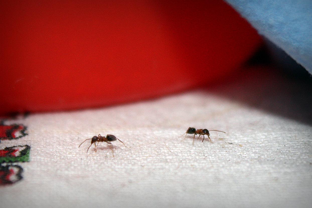 The cicianebbia 39 s help formiche for Esche per formiche