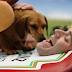 "HEINZ Ketchup 2016 Super Bowl 50 Hot Dog Commercial ""Wiener Stampede"""