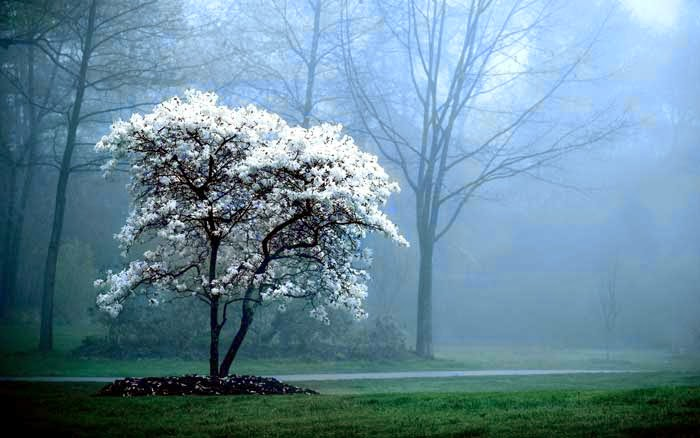 foggy-morning-beautiful-nature-hover-effect-photos-css-html