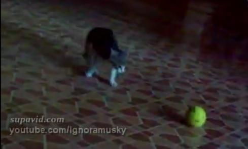 Vidéo chat vs balle