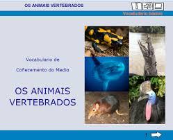 https://www.edu.xunta.es/espazoAbalar/sites/espazoAbalar/files/datos/1363693614/contido/vocabulario_animais_vertebrados.html