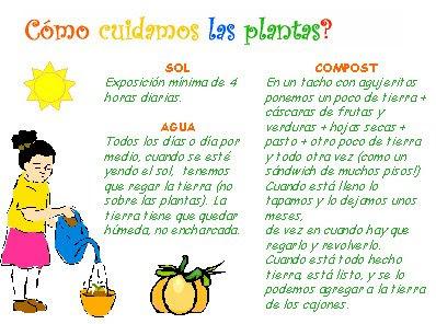 Vamos a cuidar las plantas de casa for Como cuidar las plantas ornamentales
