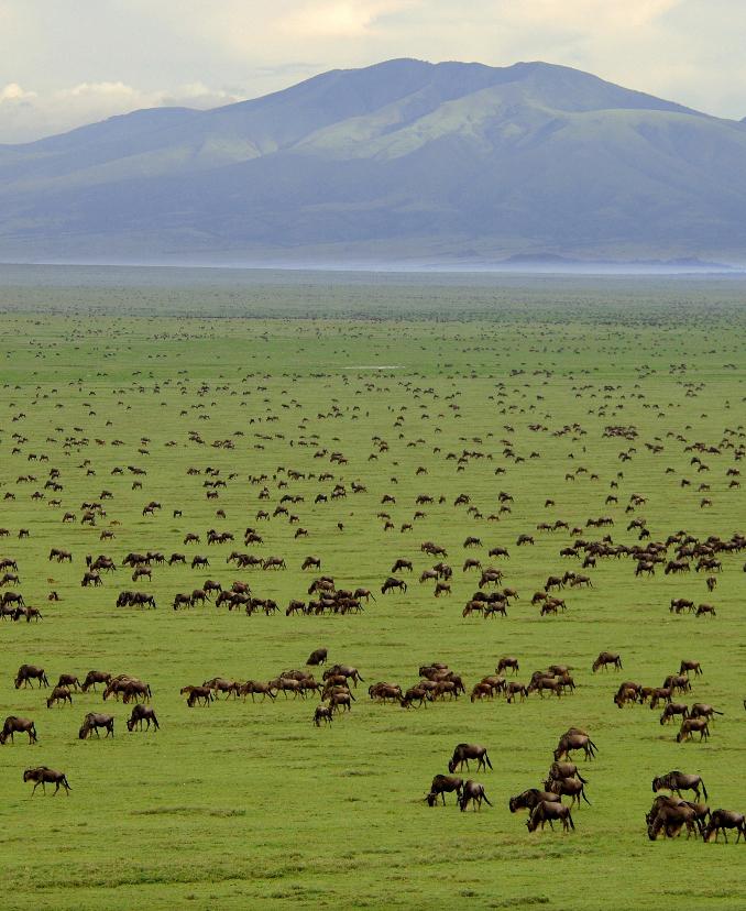 Serengeti National Park, Tanzania:
