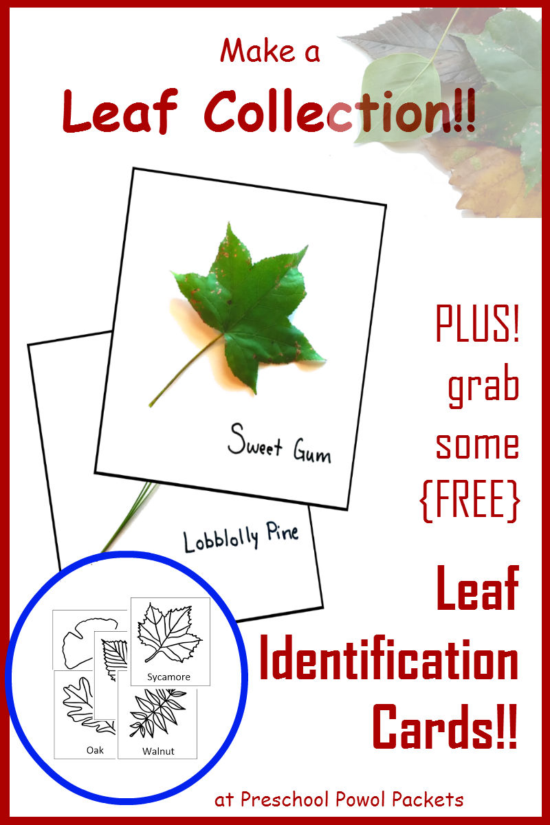 tree leaf collection with free leaf identification cards