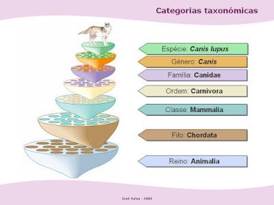 Categorias taxonomicas