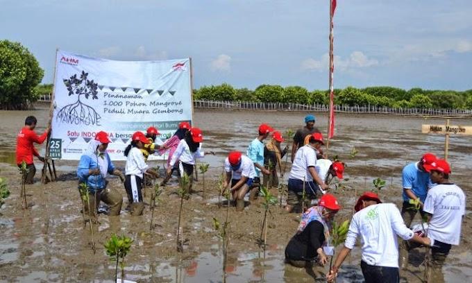 CSR AHM Tanam 1000 Pohon Mangrove
