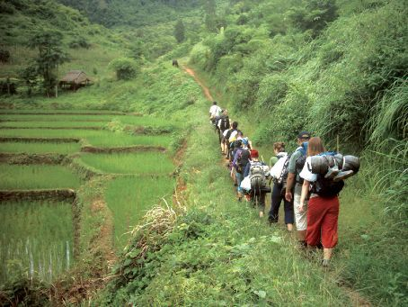 Jungle Tours in Thailand – Uncover the secrets of the Rainforest