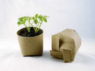 Toilet+paper+seed+starters