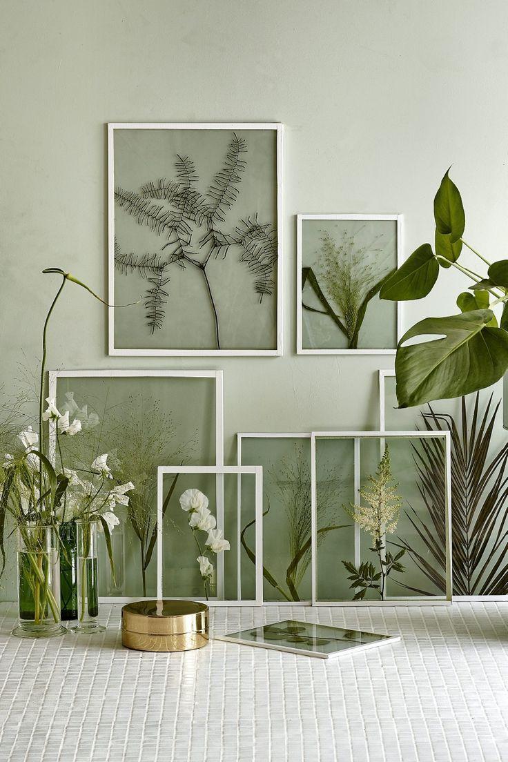 Ranting pun bisa menjadi dekorasi ruangan