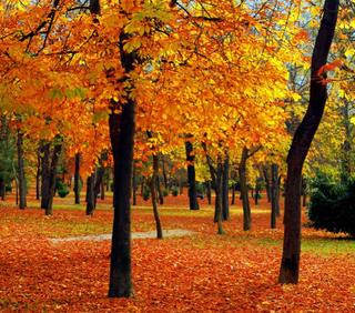 Yaridg gama calida - Imagenes de colores calidos ...