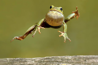 http://www.cuteness.com/sites/default/files/diy_blog/Its-Frog-Jumping-Jubilee-Day.jpg