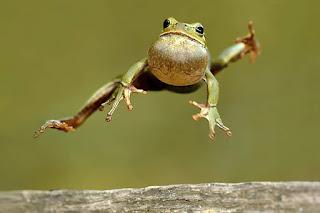 http://www.cuteness.com/sites/default/files/diy_blog/Its-Frog-Jumping-Jubilee-Day.jpg