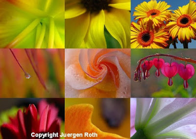 http://juergen-roth.artistwebsites.com/art/all/all/all/flowers