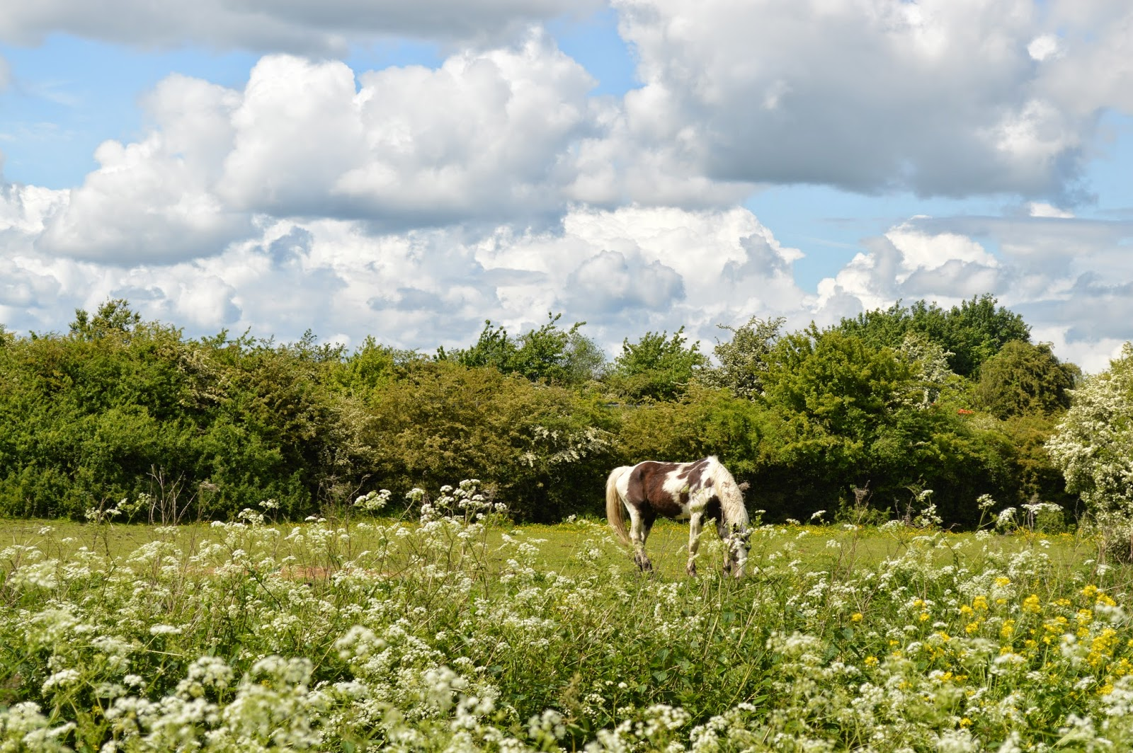 photo, phtography, visit, horse, meadow, sunshine, grass, field, grazing, UK, Essex, countryside, bike ride, carefree, mini-adventure, cycle, outside, route, weir, water, glisten, reflection, happy, happiness