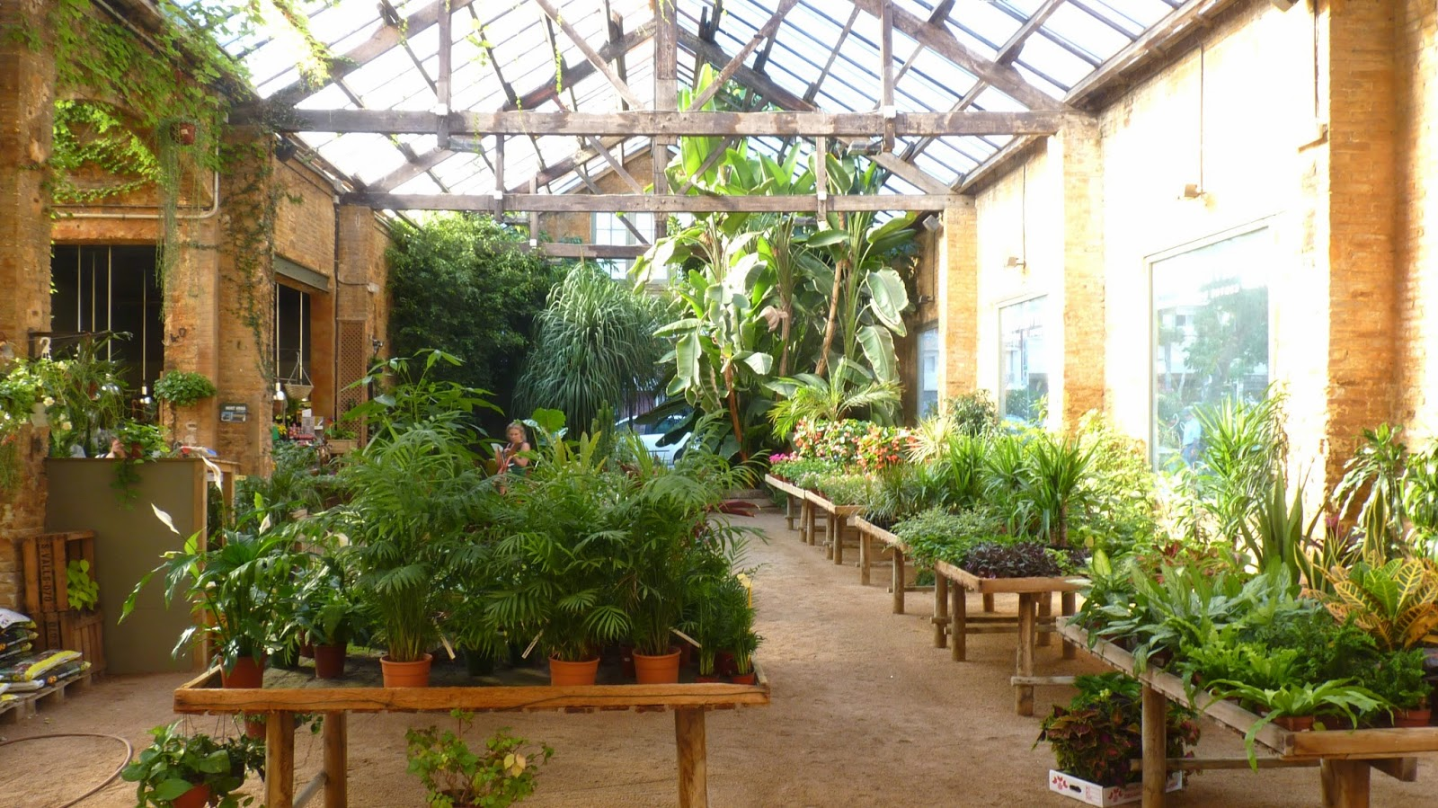 Pasi n por las plantas hivernacle drimvic for Centro de jardineria