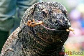 Daftar Pemenang New 7 Wonders Terbaru - Pulau Komodo Menjadi Juara Keajaiban Dunia