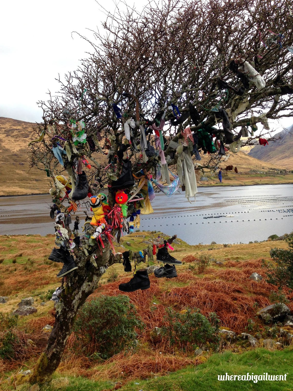 Wish Tree Killary Harbour