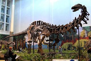Apatosaurus Bone