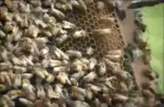 manfaat-madu-dan-produk-lebah